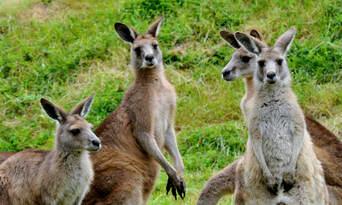 Healesville Sanctuary and Phillip Island Wildlife Park Tour Thumbnail 3