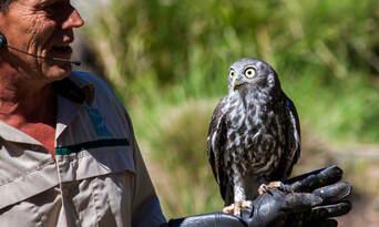 Healesville Sanctuary and Phillip Island Wildlife Park Tour Thumbnail 4