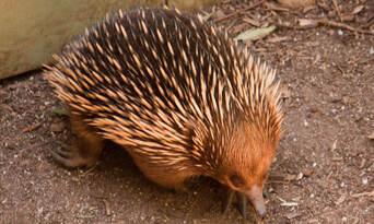 Healesville Sanctuary and Phillip Island Wildlife Park Tour Thumbnail 5