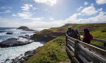 Phillip Island Wildlife and Brighton Beach Boxes Tour Thumbnail 2