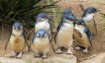 Phillip Island Wildlife and Brighton Beach Boxes Tour Thumbnail 3