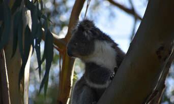 Phillip Island Wildlife and Brighton Beach Boxes Tour Thumbnail 4