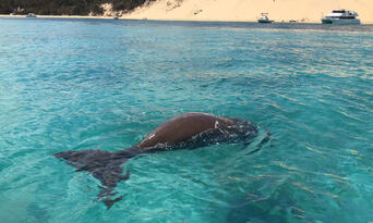 Moreton Island Dolphin Spotting and Snorkelling Cruise departing from Brisbane Thumbnail 4