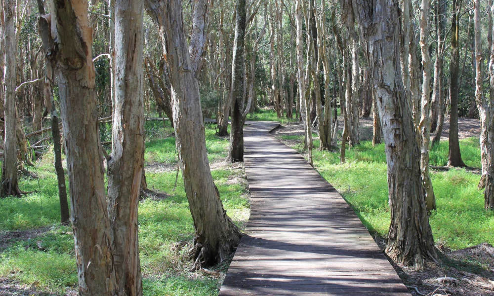 Free Things To Do  Kooloonbung Creek Nature Park