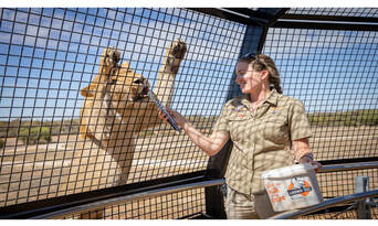 Lions, Wines and Limousine Thumbnail 2