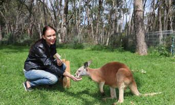 Cleland Wildlife Park Tour from Adelaide Thumbnail 1