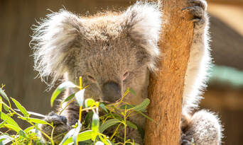 Cleland Wildlife Park Tour from Adelaide Thumbnail 2
