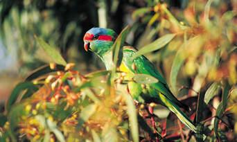 Cleland Wildlife Park Tour from Adelaide Thumbnail 3