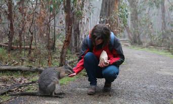 Cleland Wildlife Park Tour from Adelaide Thumbnail 4