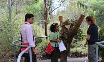 Cleland Wildlife Park Tour from Adelaide Thumbnail 5