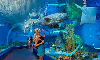 Marine Life Encounter Including Lunch Thumbnail 2