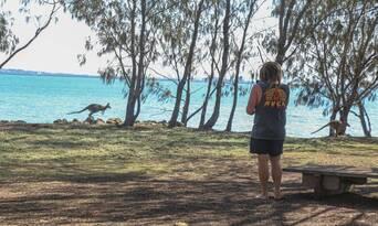 Best Of Moreton Bay 3 Island Safari Day Tour Thumbnail 6