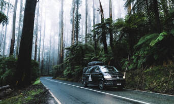 Yarra Valley and Dandenong Ranges Private Tour from Melbourne Thumbnail 6