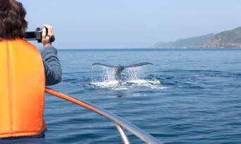 Sydney Whale Watching Cruise with BBQ Lunch - Buy One Get One FREE Special Offer Thumbnail 6
