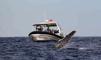 Mooloolaba 2 hour Whale Watching Experience Thumbnail 4