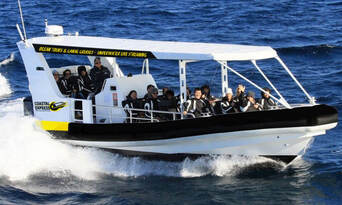 Mooloolaba 2 hour Whale Watching Experience Thumbnail 6
