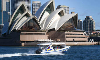 Sydney 2 Hour Whale Watching Adventure Cruise Thumbnail 3