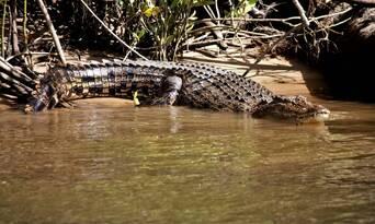 Ultimate Wildlife Experience Cruise Thumbnail 3