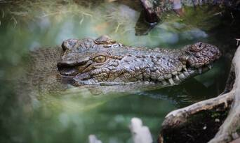 Ultimate Wildlife Experience Cruise Thumbnail 4