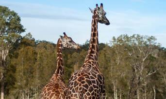 Annual Pass - Featherdale Sydney Wildlife Park + Mogo Wildlife Park Thumbnail 6