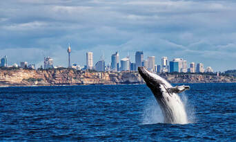 Sydney Whale Watching Cruise with BBQ Lunch Thumbnail 1