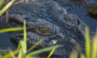Jumping Crocodile Tour from Darwin Thumbnail 1