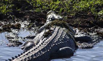 Jumping Crocodile Tour from Darwin Thumbnail 5