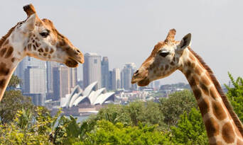 Taronga Zoo Entry and 1-Day Harbour Ferry Pass with Sky Safari Thumbnail 3