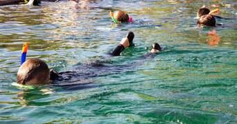 Tropical Snorkel plus Entry Thumbnail 5