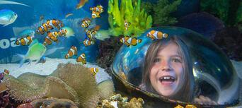 Australia Zoo and SEA LIFE Sunshine Coast Combo Ticket Thumbnail 3