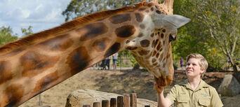 Australia Zoo and SEA LIFE Sunshine Coast Combo Ticket Thumbnail 4