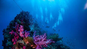 Yongala Wreck Dive Trip from Townsville and Magnetic Island Thumbnail 4