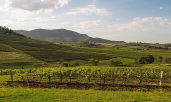 Tyrrell's Wines Sacred Sites Wine Tasting Experience Thumbnail 6