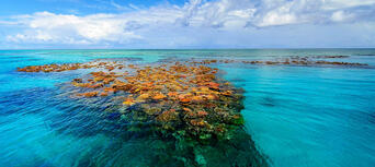 Museum Of Underwater Art And Great Barrier Reef Snorkeling Day Trip Thumbnail 1