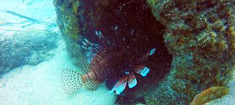 Gold Coast Introductory Scuba Dive Tour Thumbnail 3