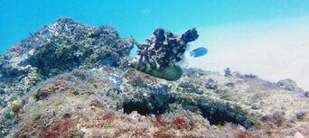 Gold Coast Introductory Scuba Dive Tour Thumbnail 6