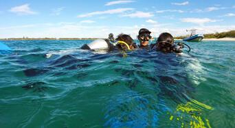 Gold Coast Introductory Scuba Dive Tour Thumbnail 1