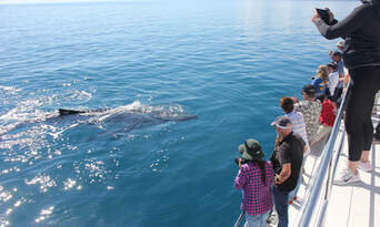 Whale Watch Cruise including Lunch Thumbnail 4