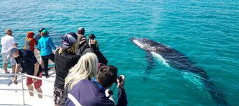 Whale Watch Cruise including Lunch Thumbnail 1