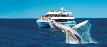 Half Day Whale Watch Cruise Thumbnail 1