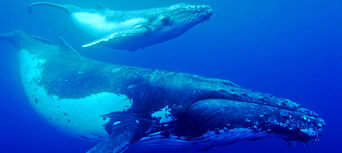 Half Day Whale Watch Cruise Thumbnail 2