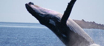 Half Day Whale Watch Cruise Thumbnail 4