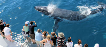 Half Day Whale Watch Cruise Thumbnail 3