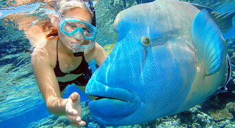 Great Barrier Reef Cruise to Reef Magic Cruises Pontoon Thumbnail 1