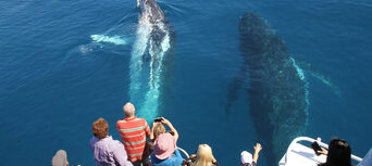 Hervey Bay Afternoon Whale Watch Cruise Thumbnail 2