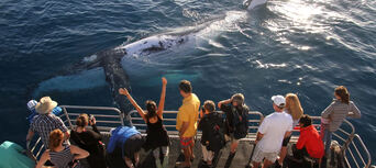 Hervey Bay Afternoon Whale Watch Cruise Thumbnail 5