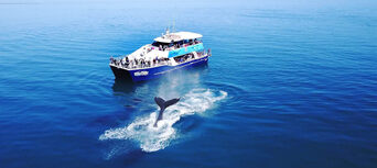 Hervey Bay Afternoon Whale Watch Cruise Thumbnail 6
