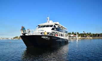 Whale Watching Cruise from Mooloolaba Thumbnail 3
