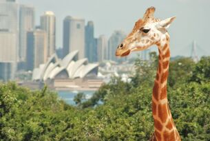 Taronga Zoo Entry and Return Ferry Combo Thumbnail 2