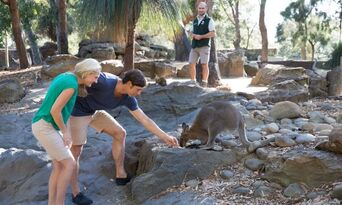 Taronga Zoo Entry and Return Ferry Combo Thumbnail 6